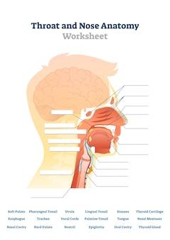 Ilustração de anatomia da garganta e nariz