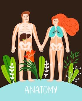 Ilustração de anatomia de pessoas