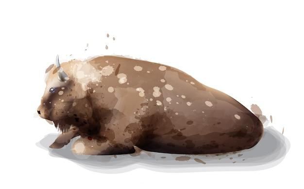 Ilustração de aquarela de búfalo