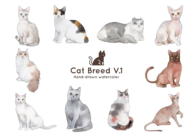 Ilustração de aquarela de raça de gato