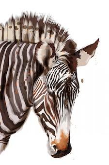 Ilustração de aquarela de zebra