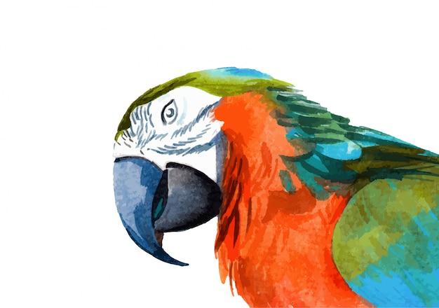 Ilustração de arara pintada à mão em aquarela