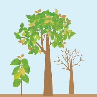 Ilustração de árvore de teca