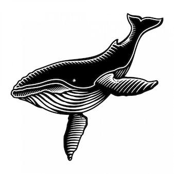 Ilustração de baleia jubarte estilo engarving
