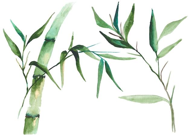 Ilustração de bambu de aquarela