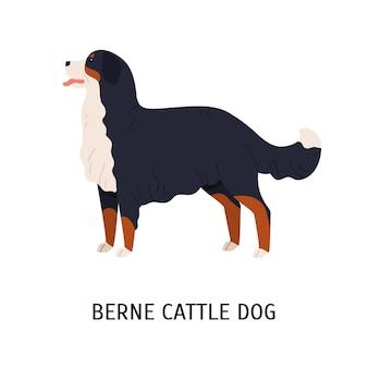 Ilustração de bernese berner sennenhund