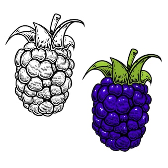 Ilustração de blackberry em gravura de estilo em fundo branco. elemento de design para logotipo, etiqueta, emblema, sinal, nemu, folheto, cartaz.