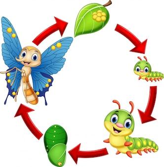 Ilustração, de, borboleta, ciclo vida