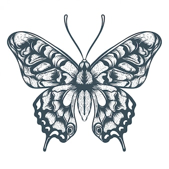 Ilustração de borboleta desenhada de mão