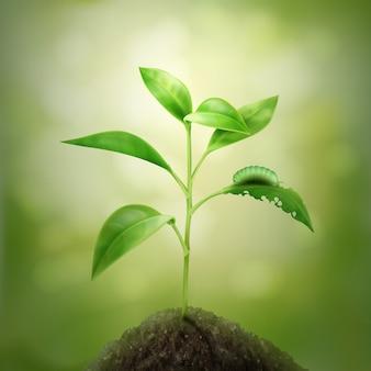 Ilustração de broto jovem verde crescendo no solo