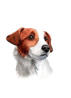 Ilustração de cachorro beagle pintada à mão em aquarela
