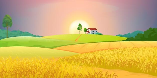 Ilustração de campos de trigo