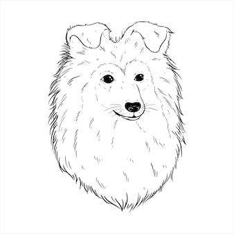 Ilustração de cão pastor de shetland com estilo de desenho ou desenho à mão