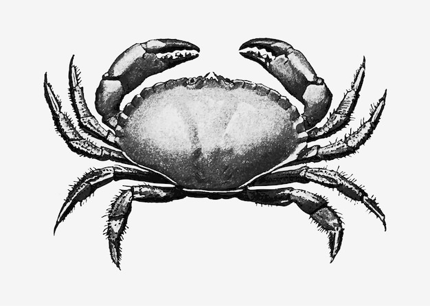 Ilustração de caranguejo vintage
