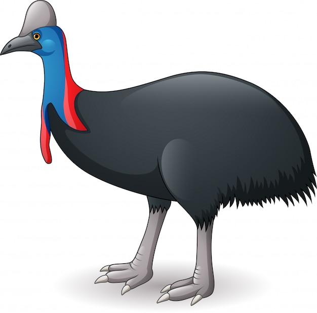 Ilustração de cassowary isolado no fundo branco