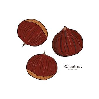 Ilustração de castanha