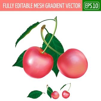 Ilustração de cereja rosa em branco