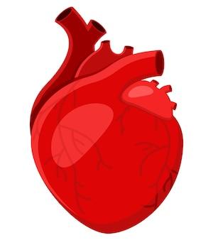 Ilustração de close-up de coração humano real