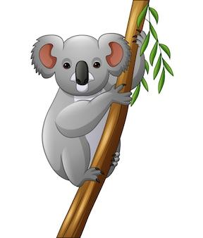 Ilustração de coala em um galho de árvore