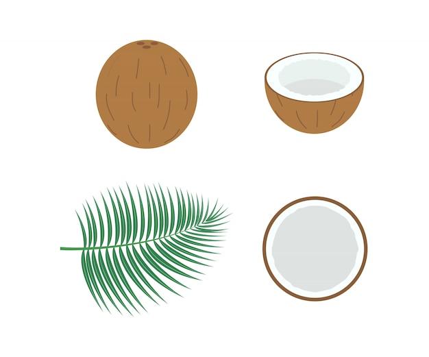 Ilustração de coco fresco conjunto