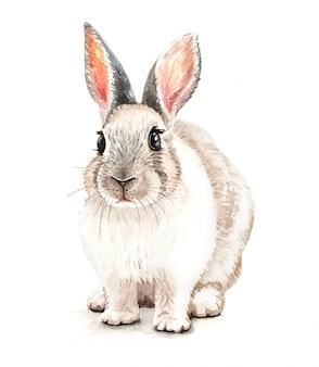 Ilustração de coelho bonito em aquarela. impressão de camiseta.