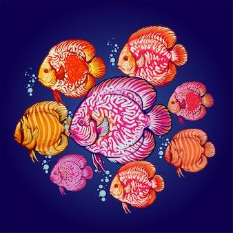 Ilustração de colônia de peixes discus