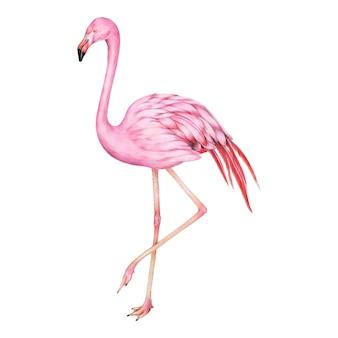 Ilustração, de, cor-de-rosa, flamingo, aquarela, estilo