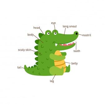 Ilustração, de, crocodilo, vocabulário, parte, de, body.vector