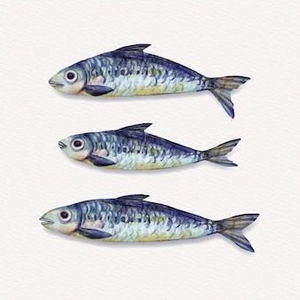 Ilustração de deliciosa sardinha pintada à mão