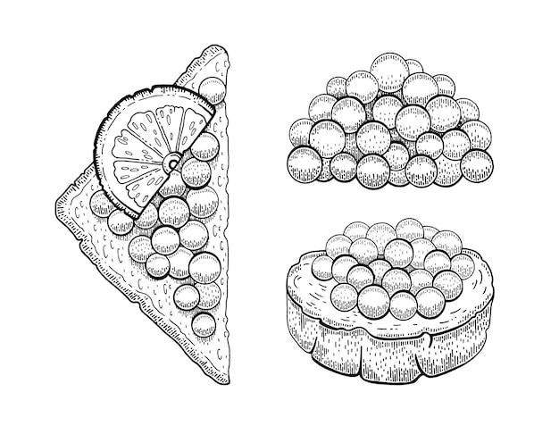 Ilustração de desenho de caviar