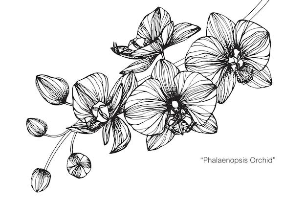Ilustração de desenho de flor de orquídea.