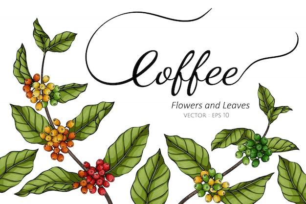 Ilustração de desenho de flor e folha de café com linha artística em brancos.