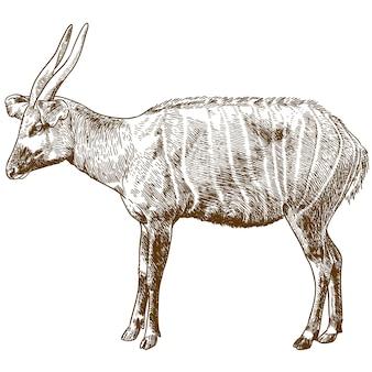 Ilustração de desenho de gravura de antílope bongo