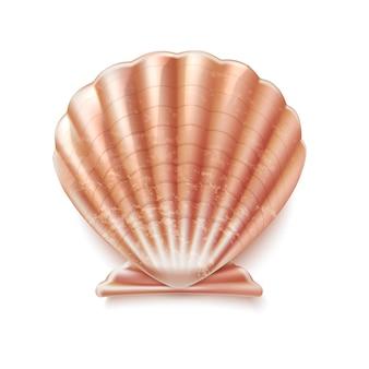 Ilustração de desenho de molusco elegante de concha marinha