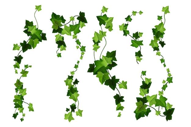 Ilustração de desenho de vetor de planta de hera folhas de videira verde escalando galhos isolados no branco