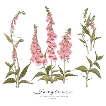 Ilustração de desenhos de flores de dedaleira