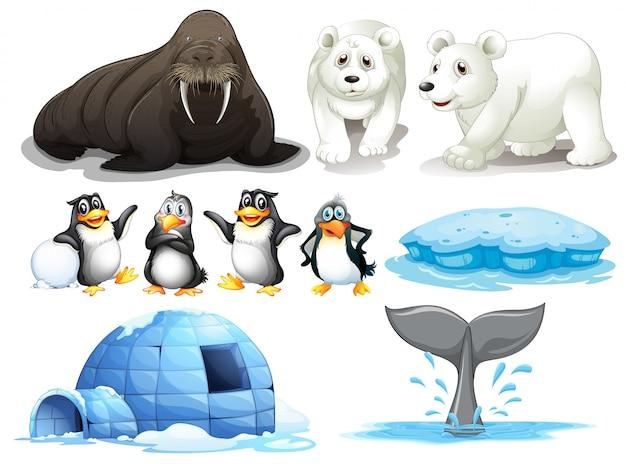 Ilustração de diferentes animais do pólo norte