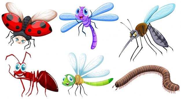 Ilustração de diferentes tipos de insetos
