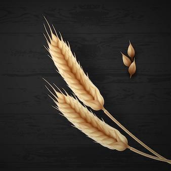 Ilustração de duas espigas de trigo maduras