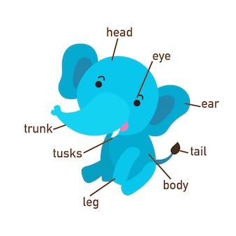 Ilustração, de, elefante, vocabulário, parte, de, body.vector