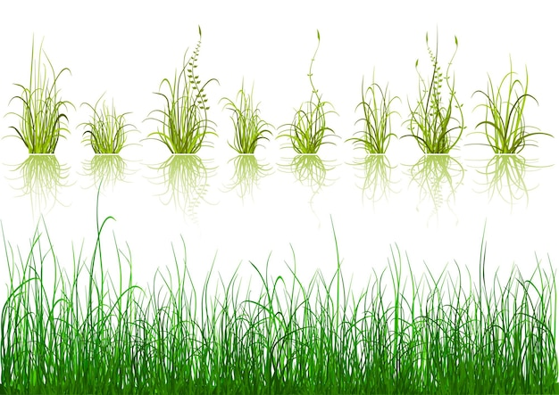 Ilustração de elementos de design de grama verde