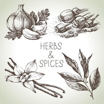Ilustração de ervas e especiarias de cozinha