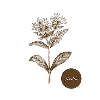 Ilustração de ervas medicinais.