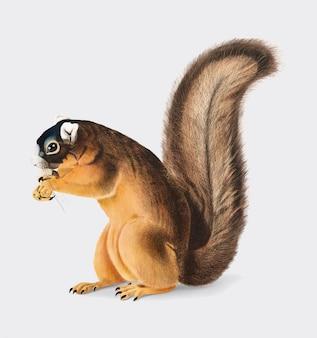 Ilustração de esquilo de raposa
