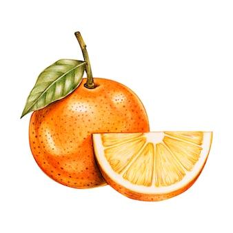 Ilustração de estilo aquarela de frutas tropicais