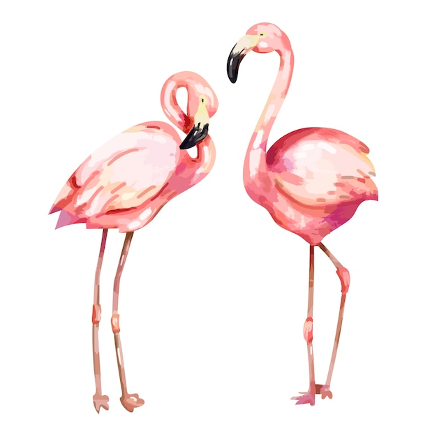Ilustração de flamingo rosa mão desenhada