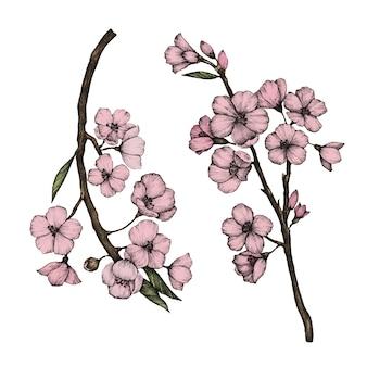 Ilustração de flor de cerejeira