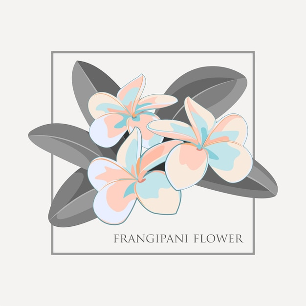 Ilustração de flor de frangipani
