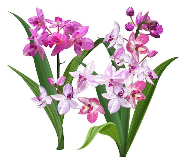 Ilustração de flor de orquídea à terra