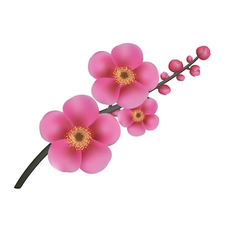 Ilustração de flores de sakura isolada